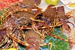 Lobster at the market Royalty Free Stock Photos