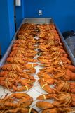 Lobster Market Royalty Free Stock Images
