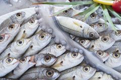 Various fresh seafood and fishes in fish market royalty free stock photos