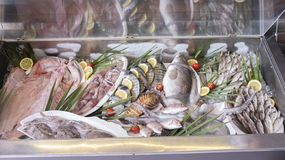 Various fresh seafood and fishes in fish market royalty free stock photo