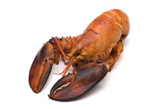 Lobster On White Background Stock Images