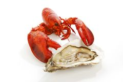 Lobster and oyster Stock Image