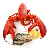 Lobster and oyster Royalty Free Stock Photo