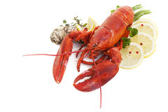 Lobster and Oysters. Studio shot with shadows on white background Stock Images