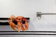 The lobster. Photography is captured for close up food concept Stock Photography