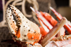 Lobster pincer closeup stock images
