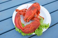 Lobster Plate royalty free stock image