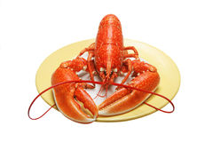 Lobster on plate Royalty Free Stock Image