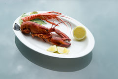 Lobster on Plate Royalty Free Stock Photography