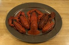 Lobster platter. A platter with 5 lobsters on it, one big one in the middle stock photos