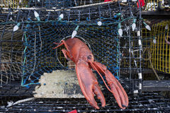 The Lobster Pot Christmas Tree, Provincetown, Massachusetts Stock Photography