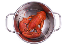 Lobster in pot Stock Images