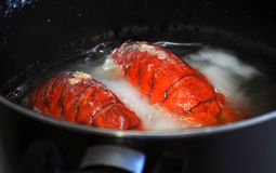 Lobster in a Pot Royalty Free Stock Photos