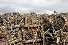 Lobster pots. Bird on top of stack of lobster pots Stock Photography