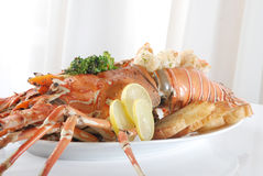 Lobster and prawns Royalty Free Stock Image