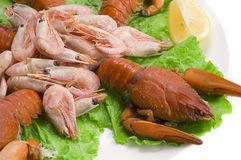Lobster and prawns. Crayfish and prawns in plate ready-to-eat Stock Photography