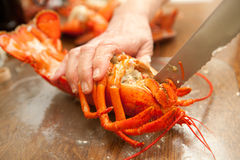 Lobster preparation Stock Photography