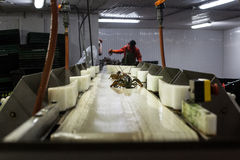 Lobster Processing Plant stock photos