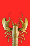 Lobster on a red background Royalty Free Stock Images
