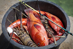 Lobster and red fish Royalty Free Stock Photos