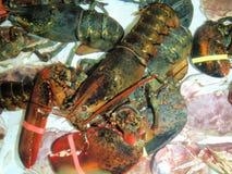 Lobster, Rock Port, Massachusetts Stock Image