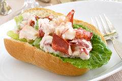 Lobster in a roll stock photo