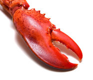 Lobster's claw. On white background stock photography