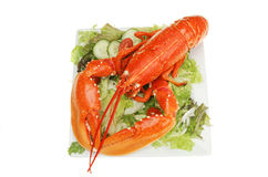 Lobster on salad Royalty Free Stock Images
