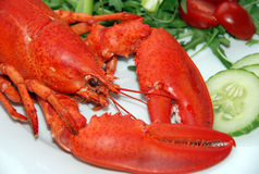 Lobster Salad. A lovely lobster salad on a white plate Royalty Free Stock Image