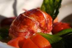 Lobster Salad Stock Image