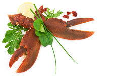 Lobster salad. Lobster claws salad isolated on white Stock Images