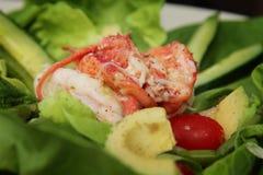 Free Lobster Salad Royalty Free Stock Photos - 46695198