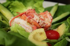 Lobster salad Royalty Free Stock Photos