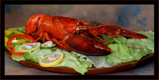 Lobster. With Salad on a board stock photo