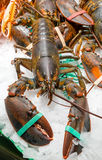 Lobster for sale at a market Royalty Free Stock Photography