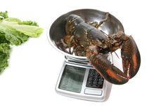 Lobster on Scale stock photo