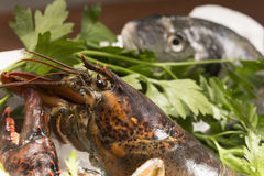 Lobster and sea bream on ice Royalty Free Stock Photo