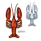 Lobster seafood animal or crayfish sketch Royalty Free Stock Photos