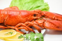 Lobster seafood delicious on white plate with lemon coriander and salad lettuce / Close up of steamed lobster food royalty free stock images