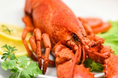 Lobster seafood delicious on white plate with lemon coriander and salad lettuce / Close up of steamed lobster food stock photo