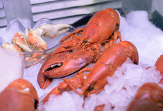 Lobster seafood on ice Stock Photo