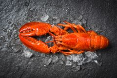 Lobster seafood shrimp prawn with ice dark backgroud top view royalty free stock photo