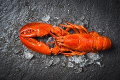 Lobster seafood shrimp prawn with ice dark backgroud top view. Lobster seafood shrimp prawn with ice on dark backgroud top view royalty free stock photo
