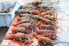 Lobster season. Many lobsters for sale at seafood market Stock Photo