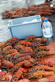 Lobster season Stock Photo