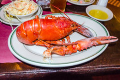 Lobster. Served Lobster in a traditional New England Restaurant royalty free stock images