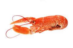 Lobster side view Stock Photos