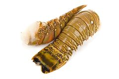 Lobster tail. Raw lobster tail - Studio shot of Stock Photography