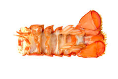 Lobster tail. Lobster tail isolated out white copyspace closeup Royalty Free Stock Images