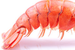 Lobster tail Royalty Free Stock Photography